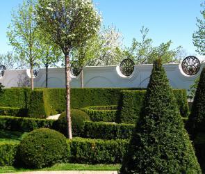 Стриженные формы в саду
