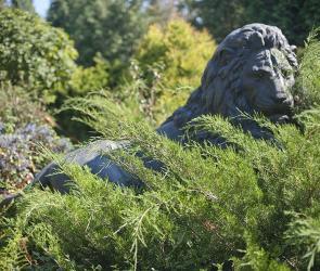 Можжевельники и садовая скульптура